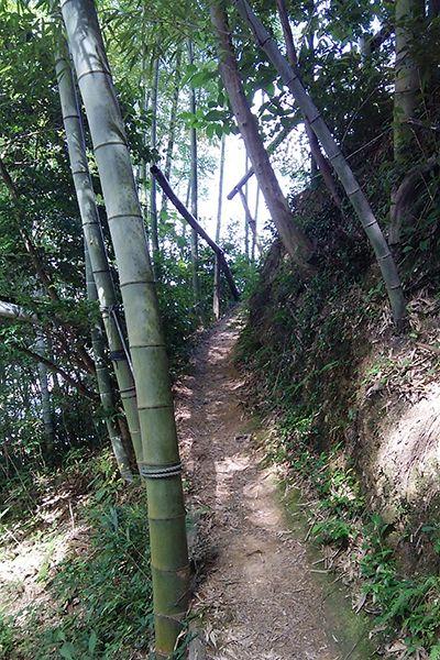 ↑事件現場となった虎尾山の山頂へと続く道は、登山道と呼んでもいいほど細く急勾配で、整備された様子はない