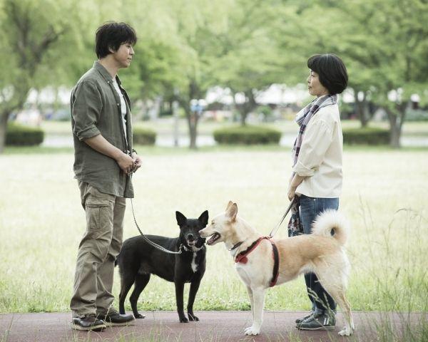 20151117_dog_eye_5