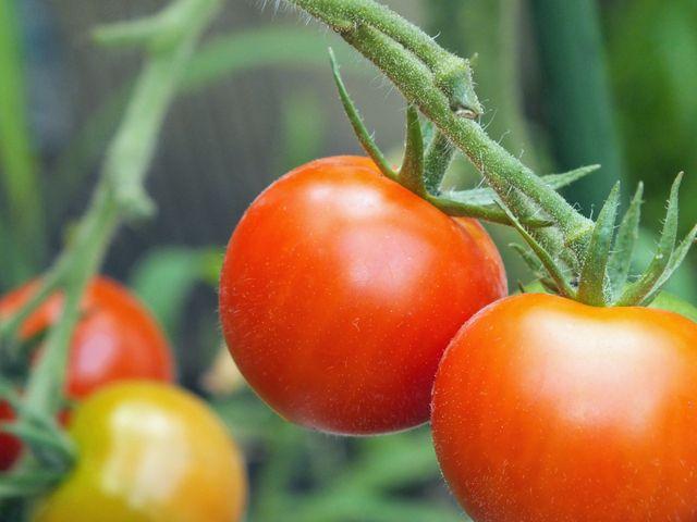tomat00604-1