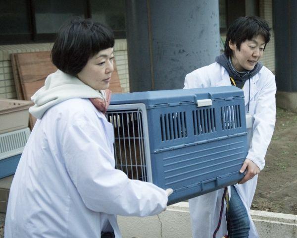[写真]動物愛護センターに何度も足を運ぶ「ちばわん」。2015年までに5000頭の犬・猫を救ってきた。